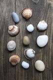 Sea shells and pebbles on an old wooden plank Stock Images