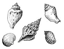 Sea shells. In pen and ink style Royalty Free Stock Photography