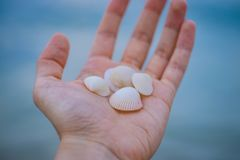 Sea Shells in Person's Hand Stock Photos