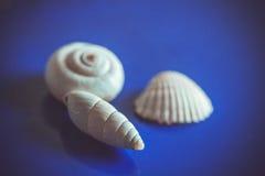 Sea shells pets look nice Stock Photos