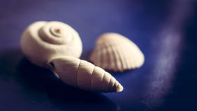 Sea shells pets look nice Royalty Free Stock Images