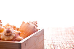 Sea shells in a pine wood box royalty free stock photo