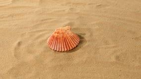 Sea shells, pink, on sand, rotation stock video