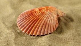 Sea shells, pink, on sand, rotation, close up stock footage