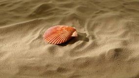 Sea shells, pink, on sand, shadow, rotation stock video