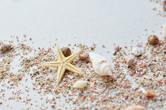 Sea shells and pink sand with a starfish on a paper background with empty space for text Stock Photos