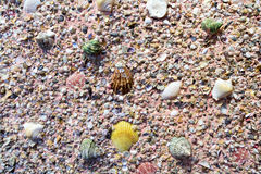 Sea shells on the plaster wall Stock Photography