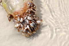 Sea shells with plastic bottle Royalty Free Stock Images