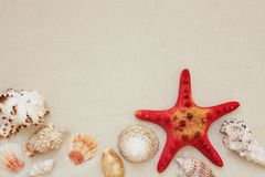 Sea shells and red star fish on sandy beach with copy space for text royalty free stock images