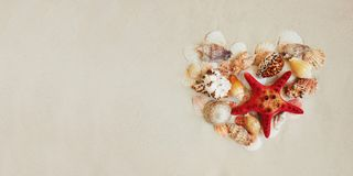 Sea shells and red star fish on sandy beach with copy space for text stock photography