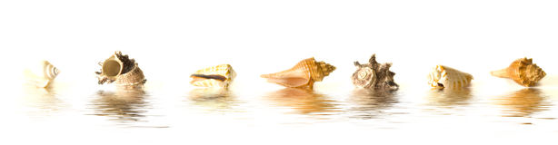 Sea shells reflections Royalty Free Stock Photography