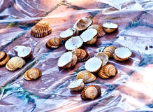 Sea shells resting on the beach or in the hands of a child Royalty Free Stock Photo