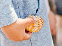 Sea shells resting on the beach or in the hands of a child Royalty Free Stock Images