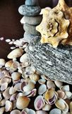 Sea shells and River stones. Many sea shells of different shape and size Stock Photography