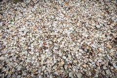 Sea shells on the riverside Stock Photo