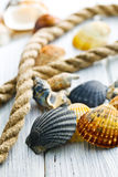 Sea shells and rope Stock Image