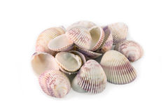 Sea shells, rose and purple Stock Photos