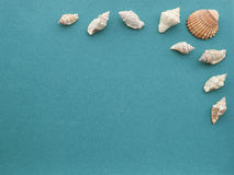 Sea shells on a rough green blue paper background. Royalty Free Stock Images
