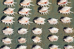 Sea shells for sale Royalty Free Stock Images