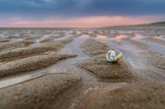 Sea Shells Sanctuary. A leftover seashell on the beach after the rain Stock Image