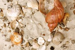 Sea Shells on sand Stock Images
