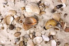 Sea Shells in sand Stock Photography