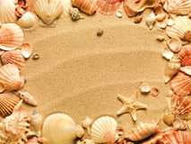 Sea shells with sand. As background Stock Photos