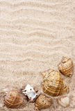 Sea shells with sand. As background Royalty Free Stock Image