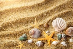 Sea shells on the sand Stock Photo
