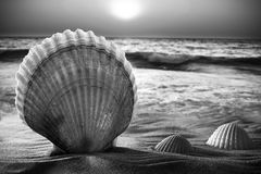 Sea shells in the sand. Stock Photos