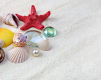 Sea shells on sand Royalty Free Stock Image