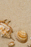 Sea shells with sand Stock Image