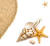 Sea shells and sand Royalty Free Stock Photo