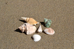 Sea shells on the sand. In the beach Stock Photography