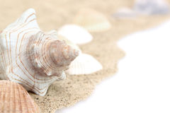 Sea Shells in Sand Royalty Free Stock Image