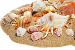 Sea shells on the sand Stock Photos