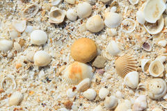 Sea shells on sand Royalty Free Stock Photos