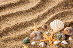 Sea shells on sand Stock Photos
