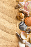 Sea shells on sand Stock Photo