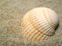 Sea shells at sand Royalty Free Stock Photos