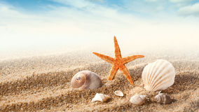 Sea shells on the sand Royalty Free Stock Image