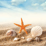 Sea shells on the sand against sky Royalty Free Stock Photo