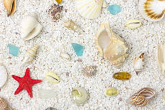 Sea shells with sand as background. Close up Royalty Free Stock Images