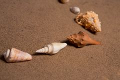 Sea shells with sand as background Stock Images