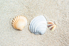 Sea shells with sand Royalty Free Stock Images