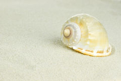 Sea shells with sand Royalty Free Stock Image