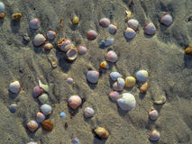Sea shells. With sand as background Royalty Free Stock Image