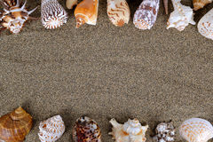 Sea shells with sand Royalty Free Stock Photography