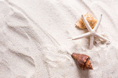 sea shells with sand as background and copyspace, summer concept Stock Images