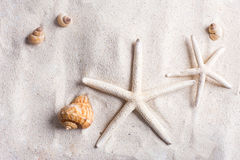 sea shells with sand as background copyspace, summer concept Stock Images
